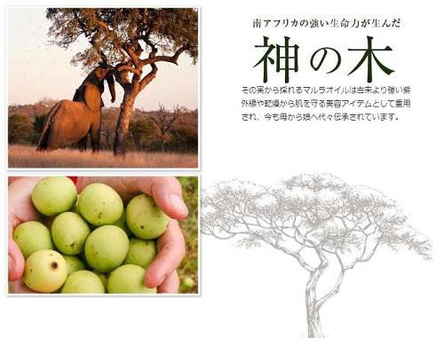 「ヴァーチェ マルラオイル」神の木