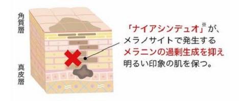「白酵リンクルデュオ」シミ予防